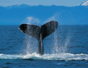 whalepicture
